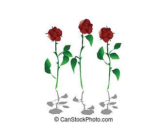 roses, vecteur