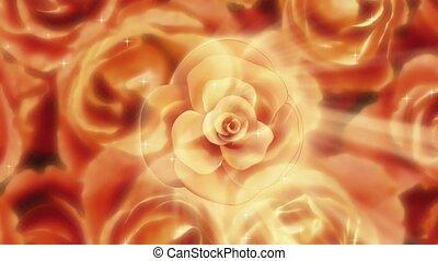 roses, vue dessus
