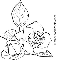 Roses with leaves, vector hand drawn illustration