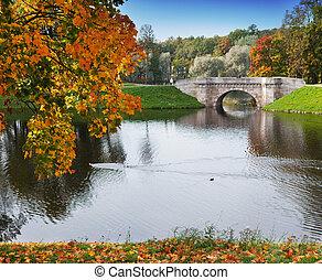 rosja, jasny, jesień, drzewo, w parku