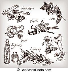 rosmarino, papavero, spezie, set., erbe, vaniglia, cucina, ...