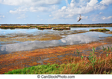 Rosolina, Rovigo, Veneto, Italy: lagoon in the nature...