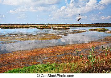 rosolina, rovigo, veneto, italy:, lagune, in, der,...