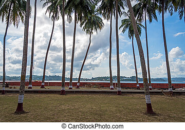 Andamans, India. tall palm trees against cloudy sky. Palm grove on Ross island Andaman and Nicobar Islands