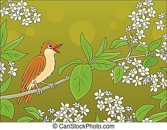 rossignol, fleurs, branche, chant