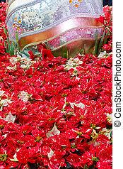 rosso bianco, poinsettias, con, gigante, ornamento natale