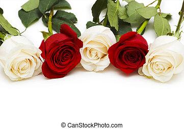 rosso bianco, rose, isolato, bianco