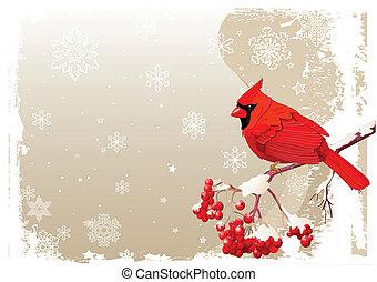 rosso, cardinale, uccello, fondo