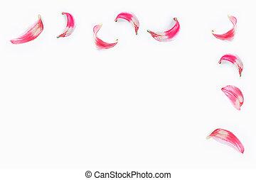 rosso, giglio, petali
