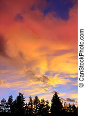 rosso, nubi tramonto, sopra, albero, su, il, lago tahoe, california