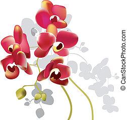 rosso, orchidea, fiori