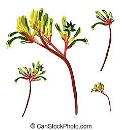 rosso verde, paw canguro, fiore, vettore