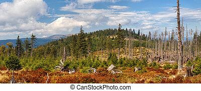 rostoucí, bohémský, kopyto, les, klesání, sumava, krajina, hluboký, mládě, -, živobytí