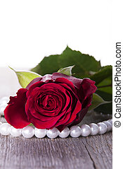 A Red Rose with Pearls as a Background