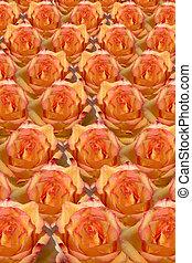 Rosy Background