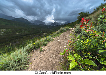 Rosy Paintbrush Flowers growing near the hiking trail to Bierstadt Lake with view of The Continental Divide Rockies Colorado