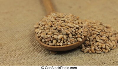 Rotating a spoon, overflowing with wheat grains, lying on...