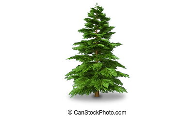 Rotating fir tree, isolated on white. With alpha