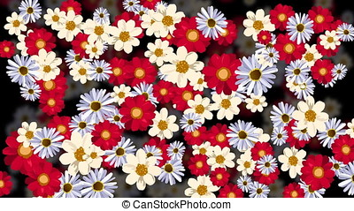 Rotating flowers with dark background