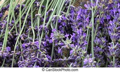 Rotating fresh lavender flowers background