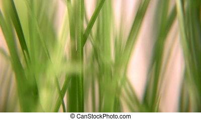 rotating grass 3