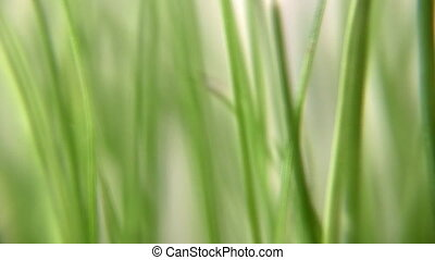 rotating grass