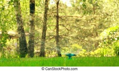 Rotating lawn sprayer in motion HD - Rotating water sprayer...
