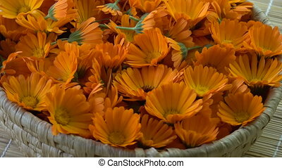 Rotating  medical marigold calendula flowers in basket