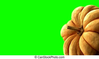 rotating pumpkin on green background with alpha channel . 3d...