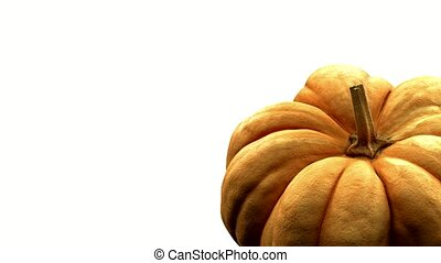 rotating pumpkin on white background with alpha channel . 3d 4K