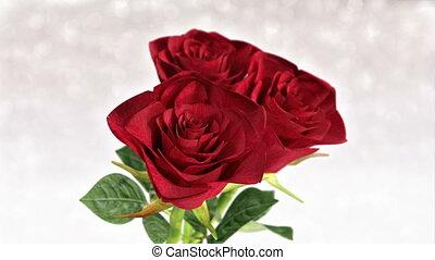 rotating red roses, wedding, birthday, st. valentines theme - 3D render. seamless loop