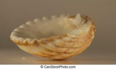 Rotating Shell