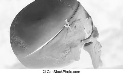Rotating skull. Inverted colour. - Rotating medical skull....