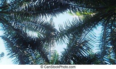 Rotating Tree Top, Palms, Costa Rica, Graded Version -...