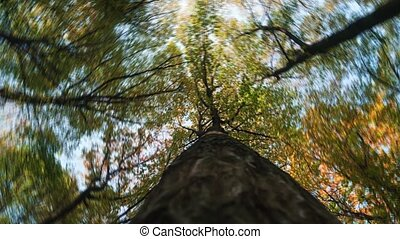 Rotating tree tops in an autumn Ukrainian forest. Video...