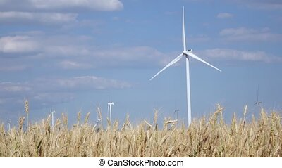 Rotating wind turbines in the field of ripening young wheat...