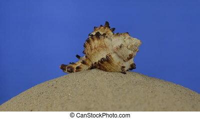 Rotation, beautiful seashells lying on the sand. Isolated