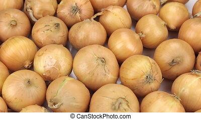 Rotation close-up, background of onion bulbs. Food...