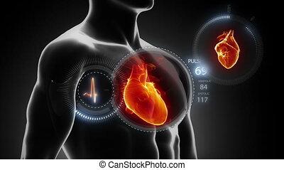 rotation, corps, à, coeur, et, pouls