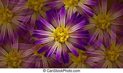 rotation, fleurs