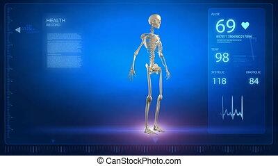rotation, humain, x-r, squelette