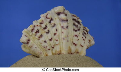 Rotation, light brown, beautiful sea shell on sand. Isolated