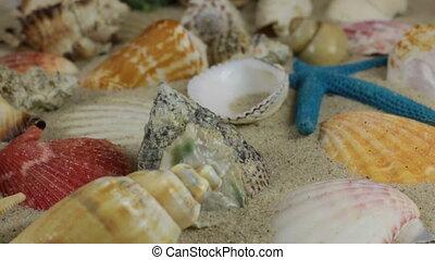 Rotation, light brown, beautiful sea shells and starfish on...