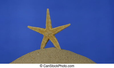 Rotation, light yellow, beautiful starfish on sand. Isolated