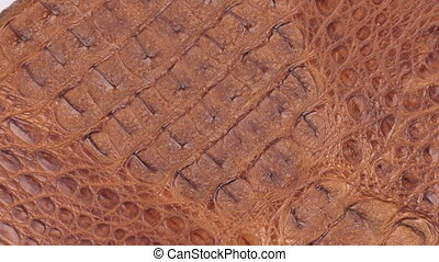 Rotation, natural crocodile skin, can be used as background...