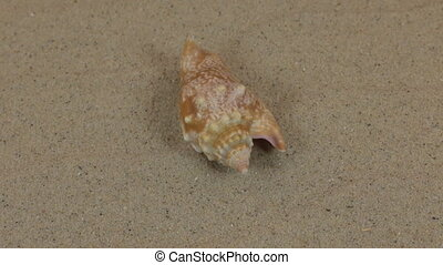 Rotation of a beautiful sea shell lying on sand dunes.