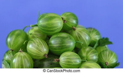 Rotation of a heap of ripe juicy green gooseberries isolated on blue background