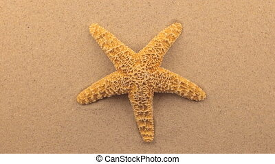 Rotation of a yellow starfish lying on the sand.