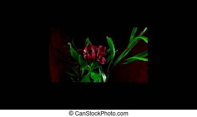 rotation of images with flowers