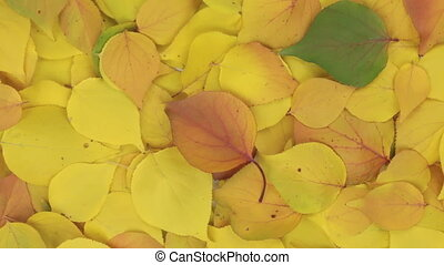 Rotation of the background of yellow leaves. View from...